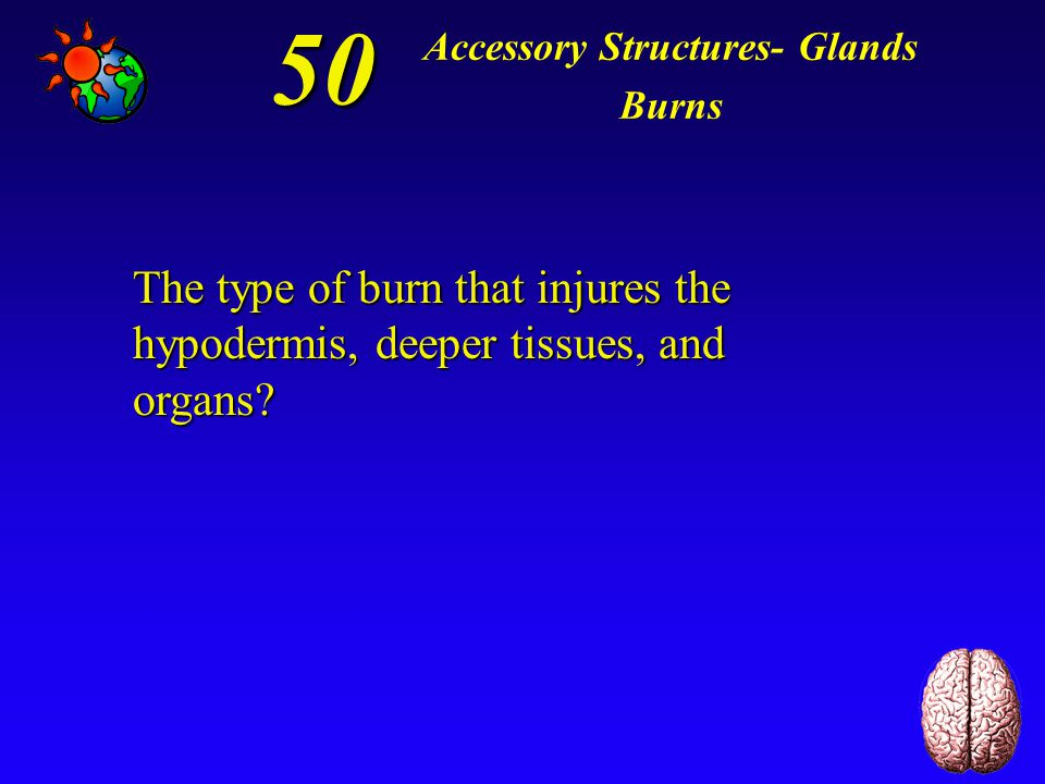 40 Accessory Structures- Glands Burns *first-degree burn