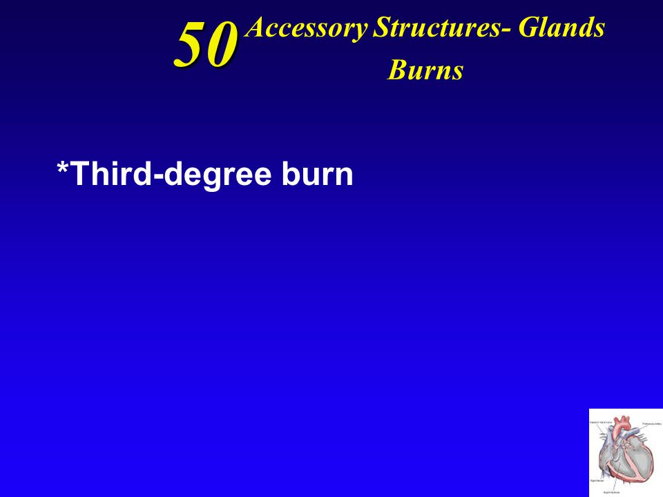 50 Accessory Structures- Glands Burns The type of burn that injures the hypodermis, deeper tissues, and organs