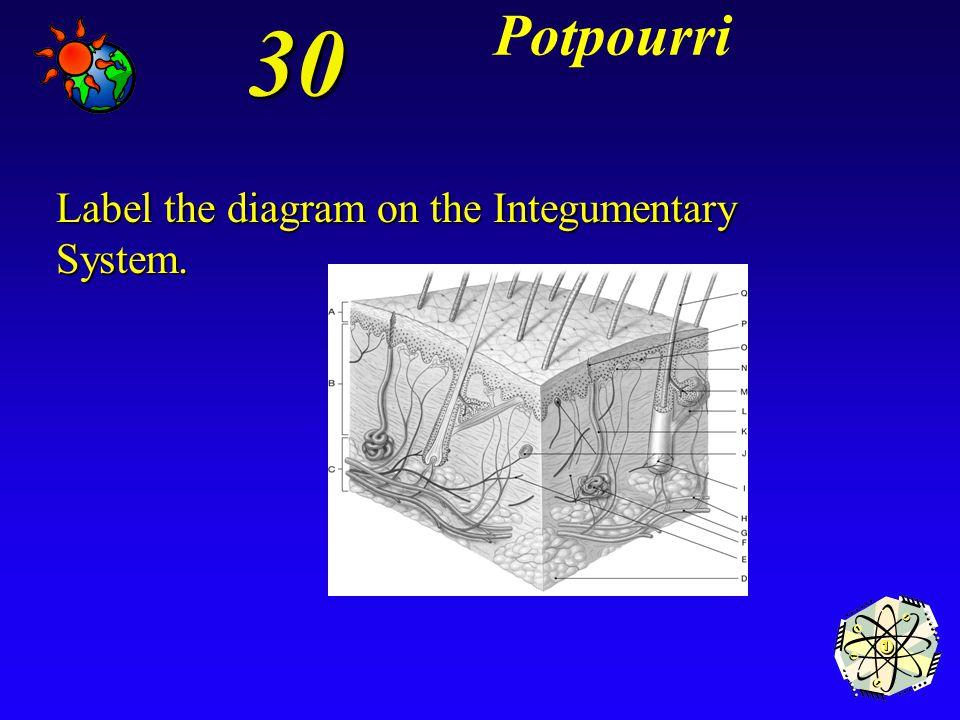 *dense irregular connective tissue 20 Potpourri