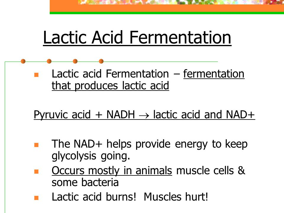 Lactic Acid Fermentation Lactic acid Fermentation – fermentation that produces lactic acid Pyruvic acid + NADH  lactic acid and NAD+ The NAD+ helps provide energy to keep glycolysis going.