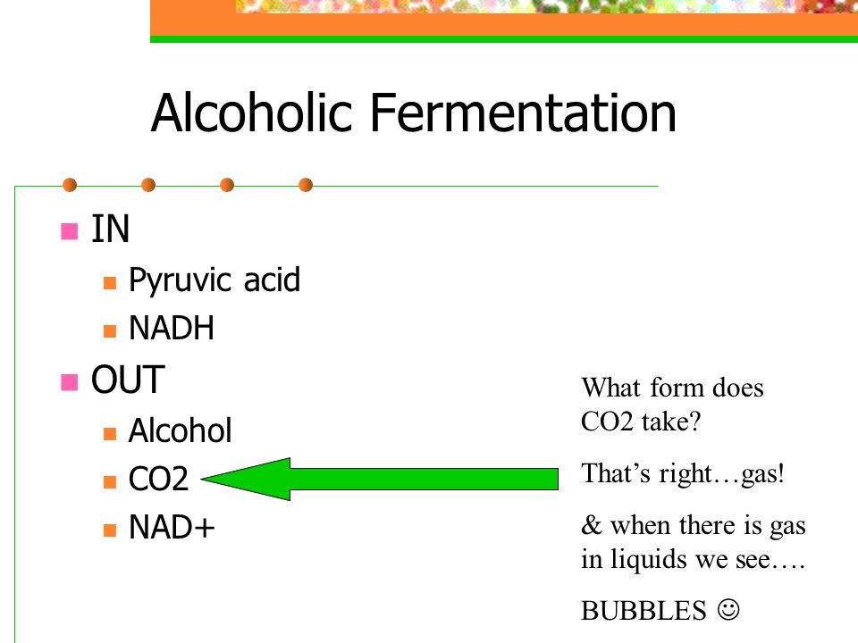 Alcoholic Fermentation IN Pyruvic acid NADH OUT Alcohol CO2 NAD+ What form does CO2 take.