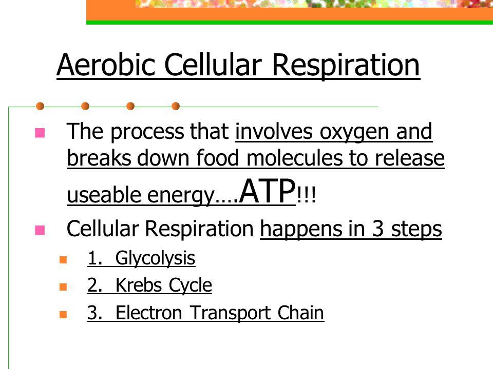 Cellular Respiration Creates 34-38 molecules of ATP