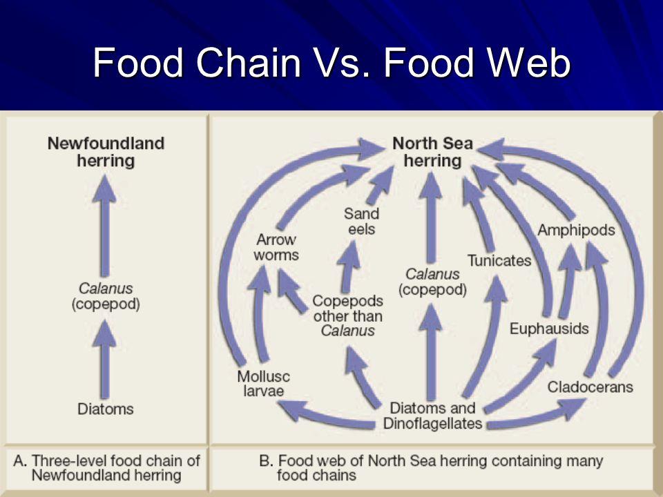 Food Chain Vs. Food Web
