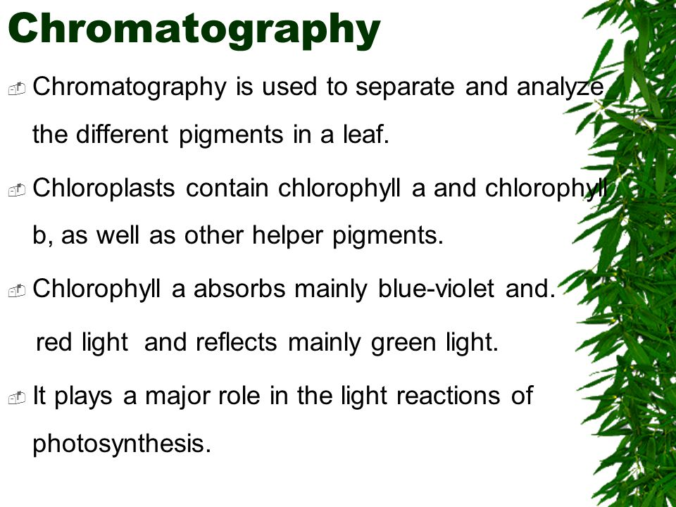 Chromatography  Chromatography is used to separate and analyze the different pigments in a leaf.