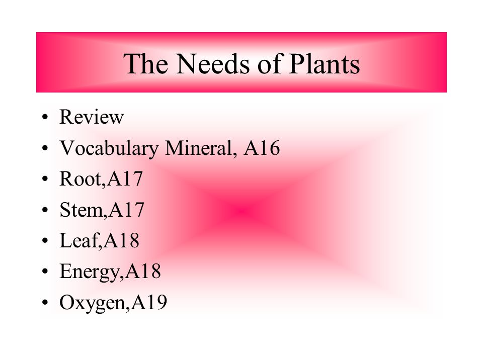 The Needs of Plants Review Vocabulary Mineral, A16 Root,A17 Stem,A17 Leaf,A18 Energy,A18 Oxygen,A19