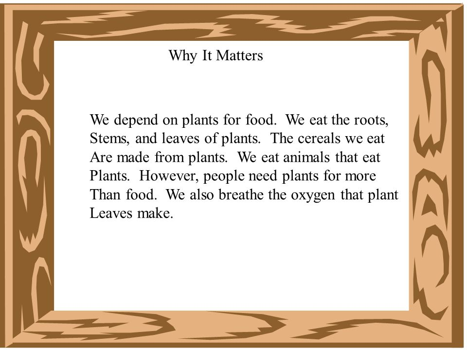 Why It Matters We depend on plants for food.We eat the roots, Stems, and leaves of plants.