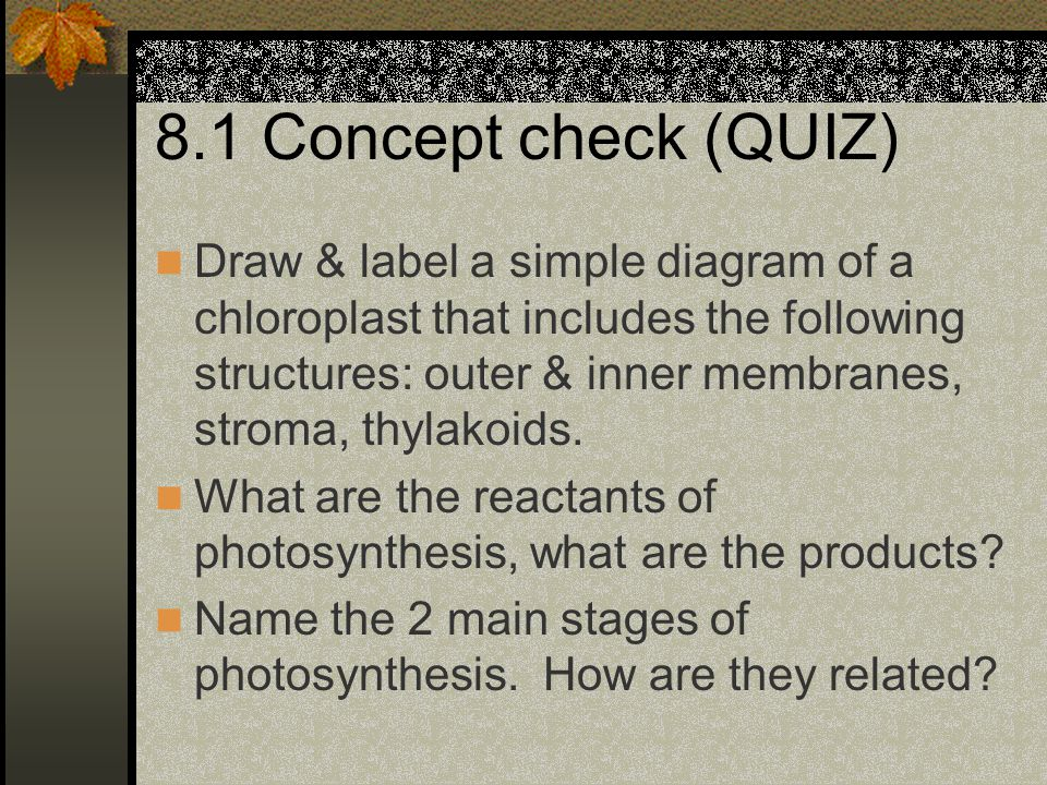 8.1 Concept check (QUIZ) Draw & label a simple diagram of a chloroplast that includes the following structures: outer & inner membranes, stroma, thyla