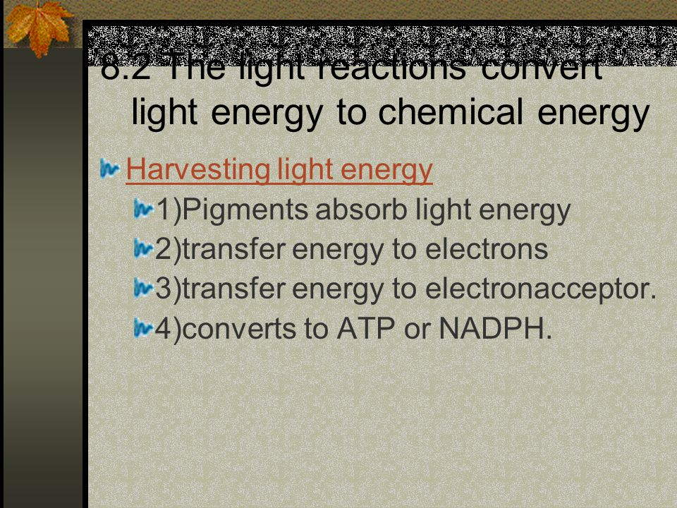 Harvesting light energy 1)Pigments absorb light energy 2)transfer energy to electrons 3)transfer energy to electronacceptor. 4)converts to ATP or NADP