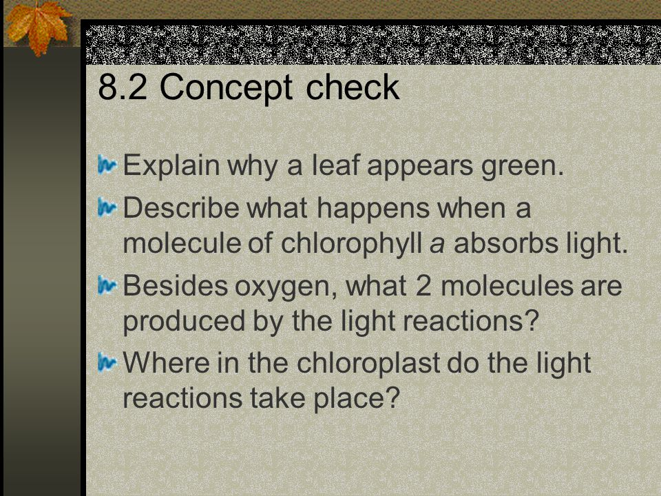 8.2 Concept check Explain why a leaf appears green. Describe what happens when a molecule of chlorophyll a absorbs light. Besides oxygen, what 2 molec