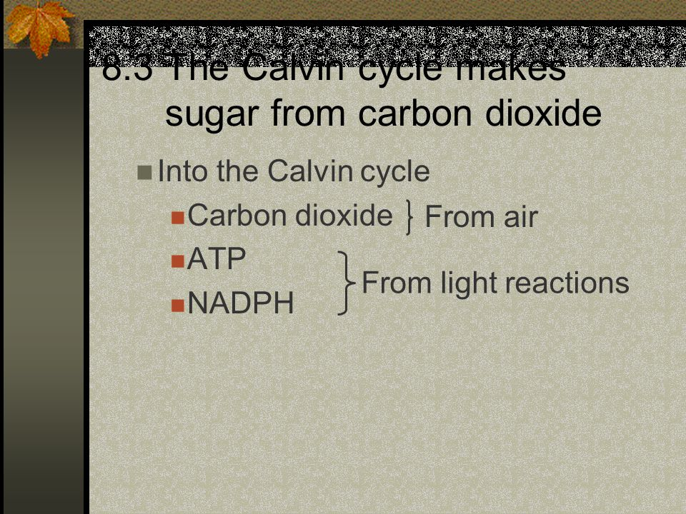 Into the Calvin cycle Carbon dioxide ATP NADPH 8.3 The Calvin cycle makes sugar from carbon dioxide From air From light reactions