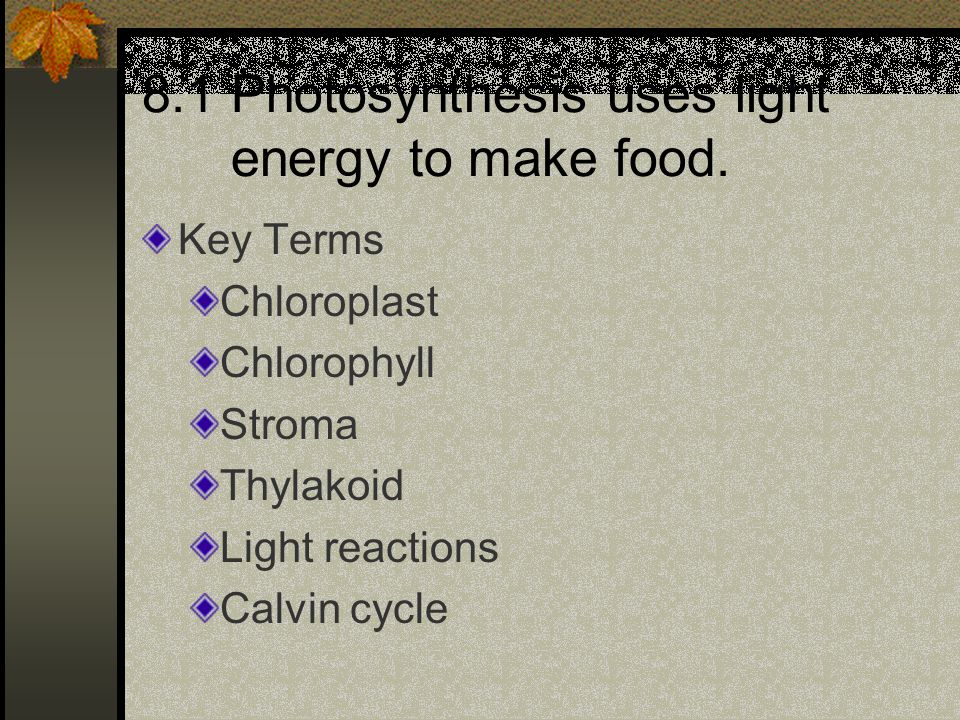 Key Terms Chloroplast Chlorophyll Stroma Thylakoid Light reactions Calvin cycle 8.1 Photosynthesis uses light energy to make food.
