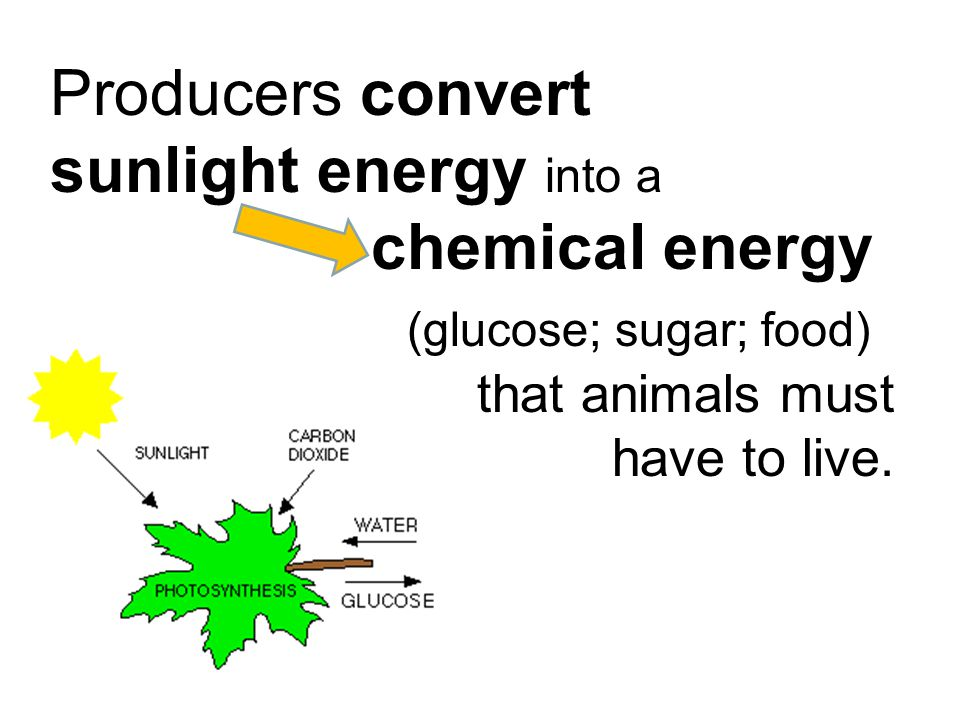 Producers convert sunlight energy into a chemical energy (glucose; sugar; food) that animals must have to live.