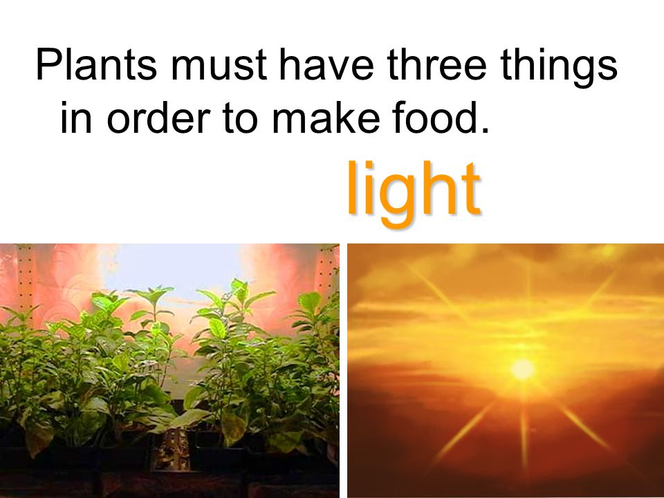 Plants must have three things in order to make food. light