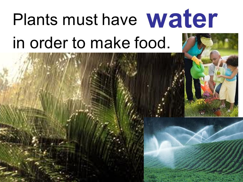 Plants must have in order to make food. water