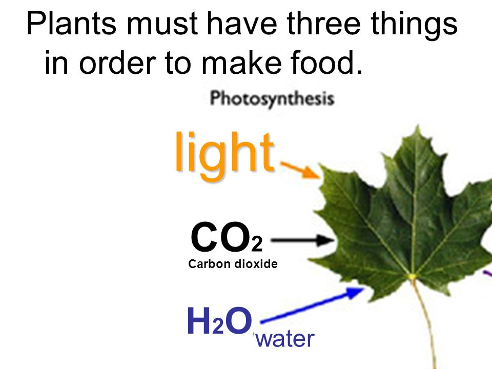 Plants must have three things in order to make food.light CO 2 Carbon dioxide H2OH2O water