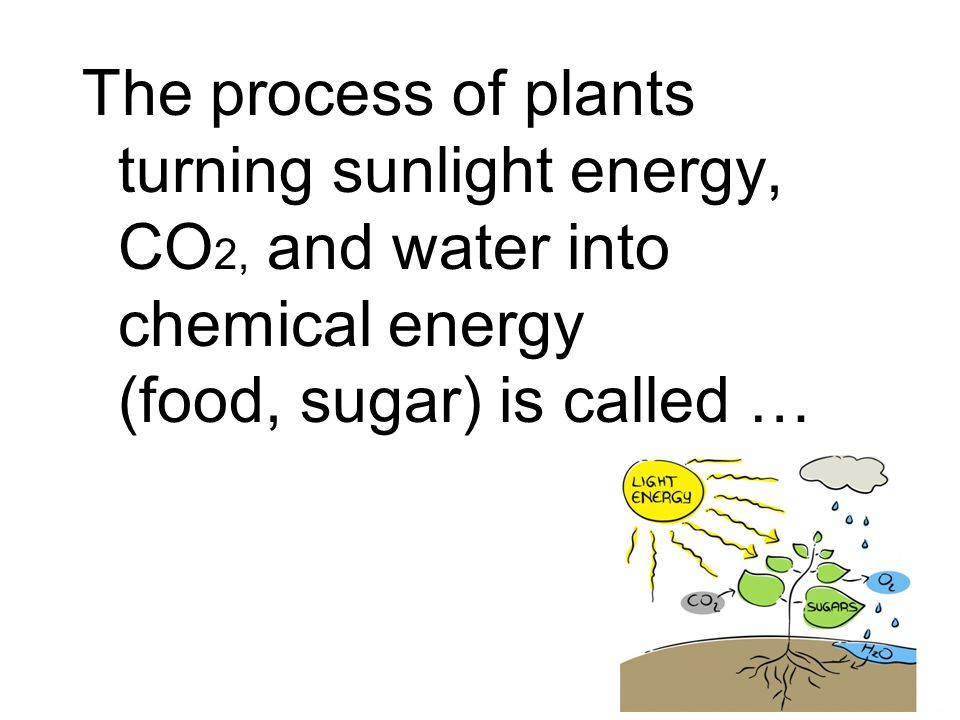 The process of plants turning sunlight energy, CO 2, and water into chemical energy (food, sugar) is called …