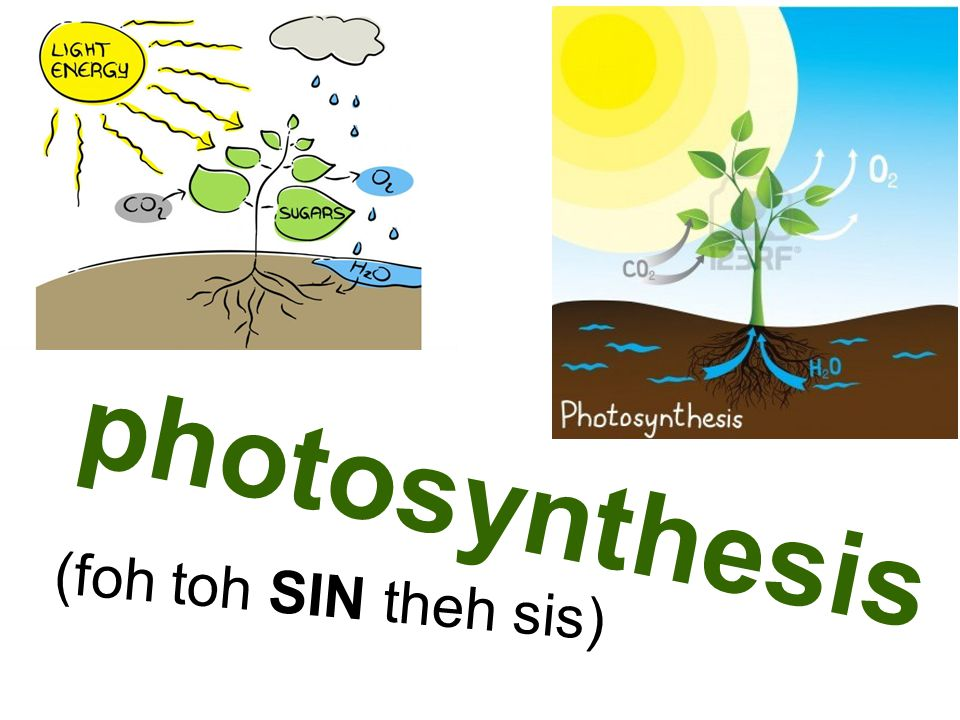 photosynthesis (foh toh SIN theh sis)