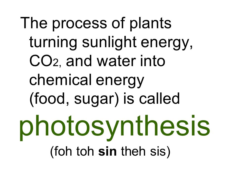 The process of plants turning sunlight energy, CO 2, and water into chemical energy (food, sugar) is called photosynthesis (foh toh sin theh sis)