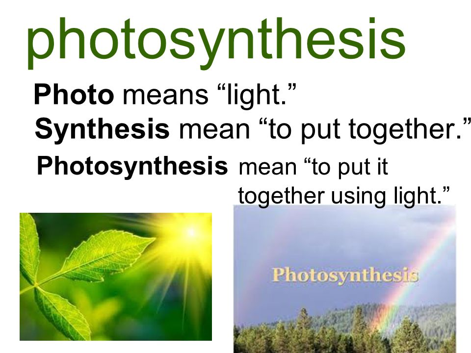photosynthesis Photo means light. Synthesis mean to put together. Photosynthesis mean to put it together using light.