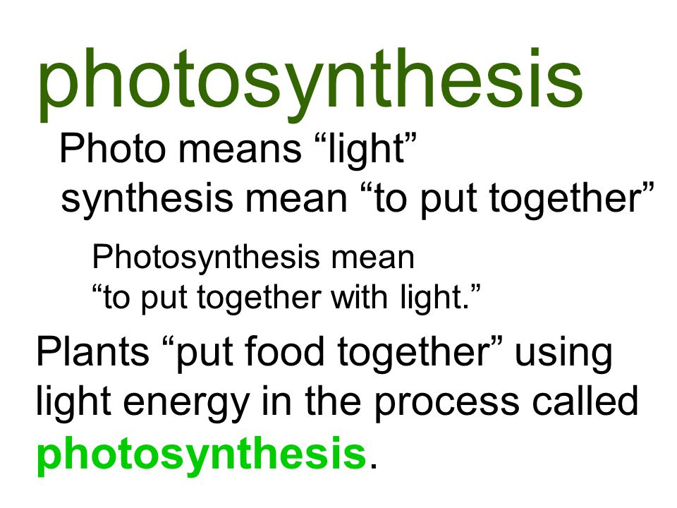 photosynthesis Photosynthesis mean to put together with light. Photo means light synthesis mean to put together Plants put food together using light energy in the process called photosynthesis.