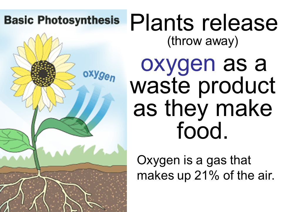 Plants release (throw away) oxygen as a waste product as they make food.