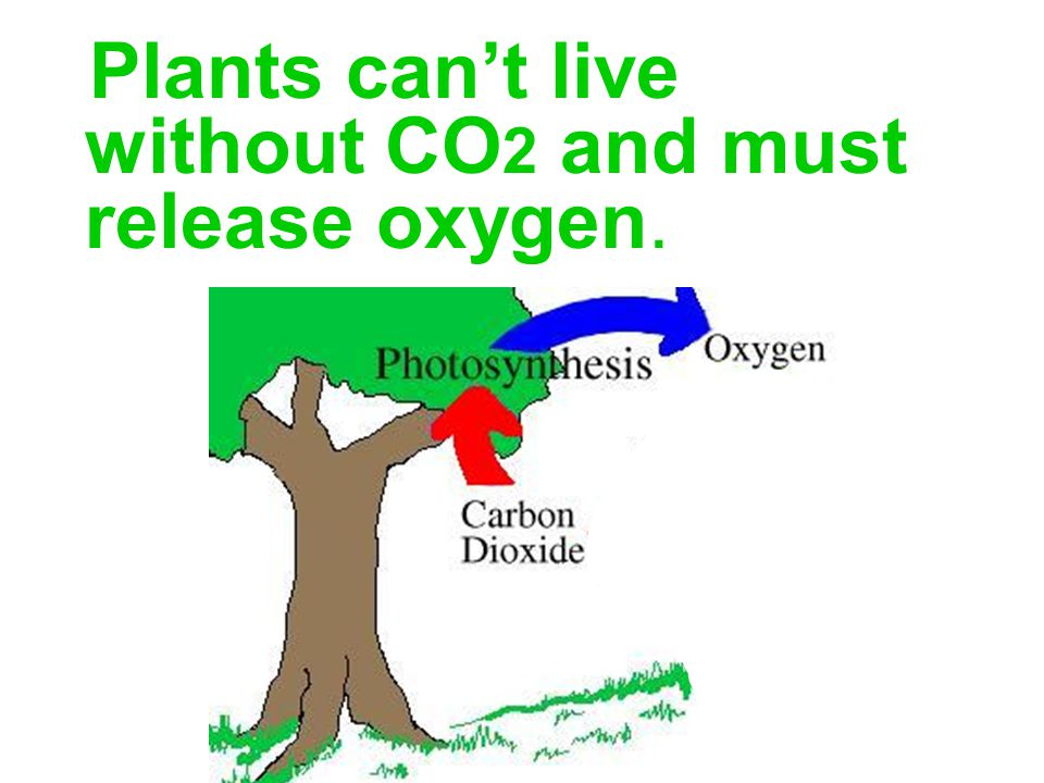 Plants can't live without CO 2 and must release oxygen.