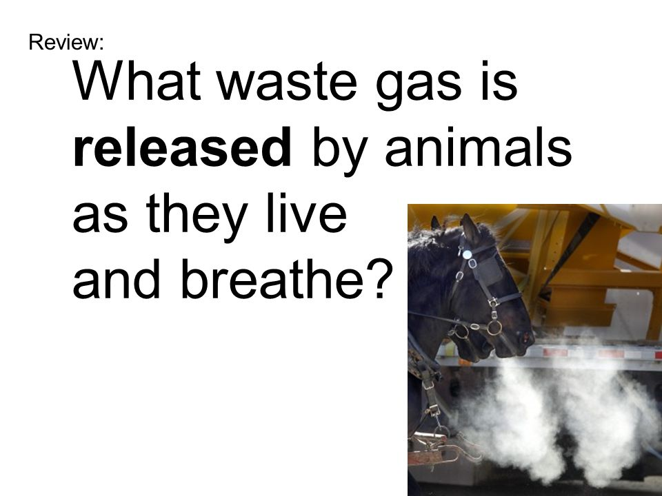 Review: What waste gas is released by animals as they live and breathe?