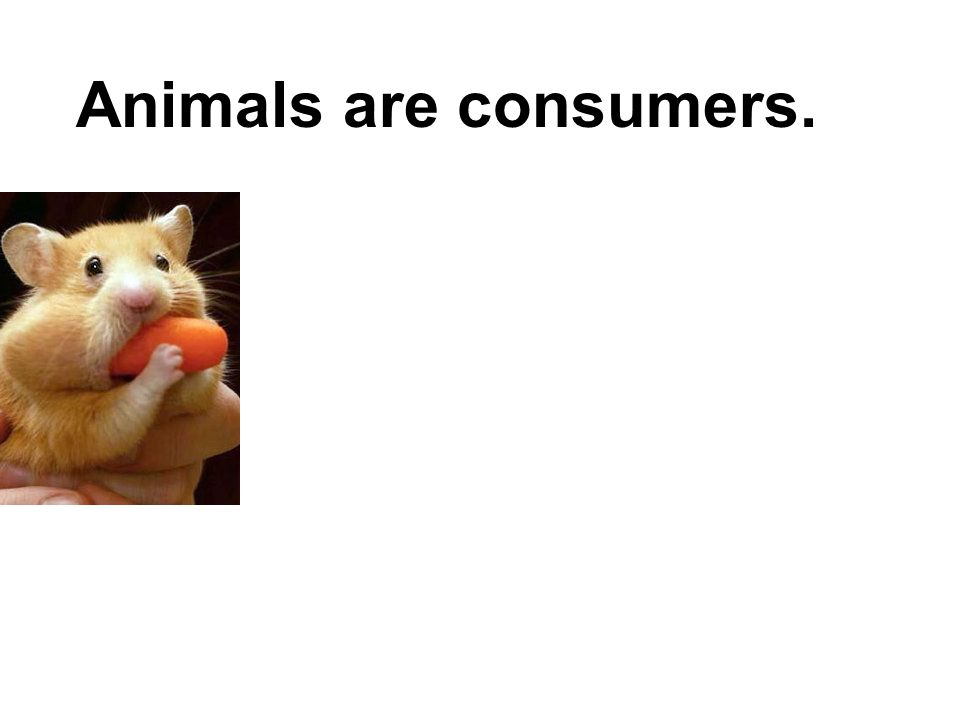 Animals are consumers.