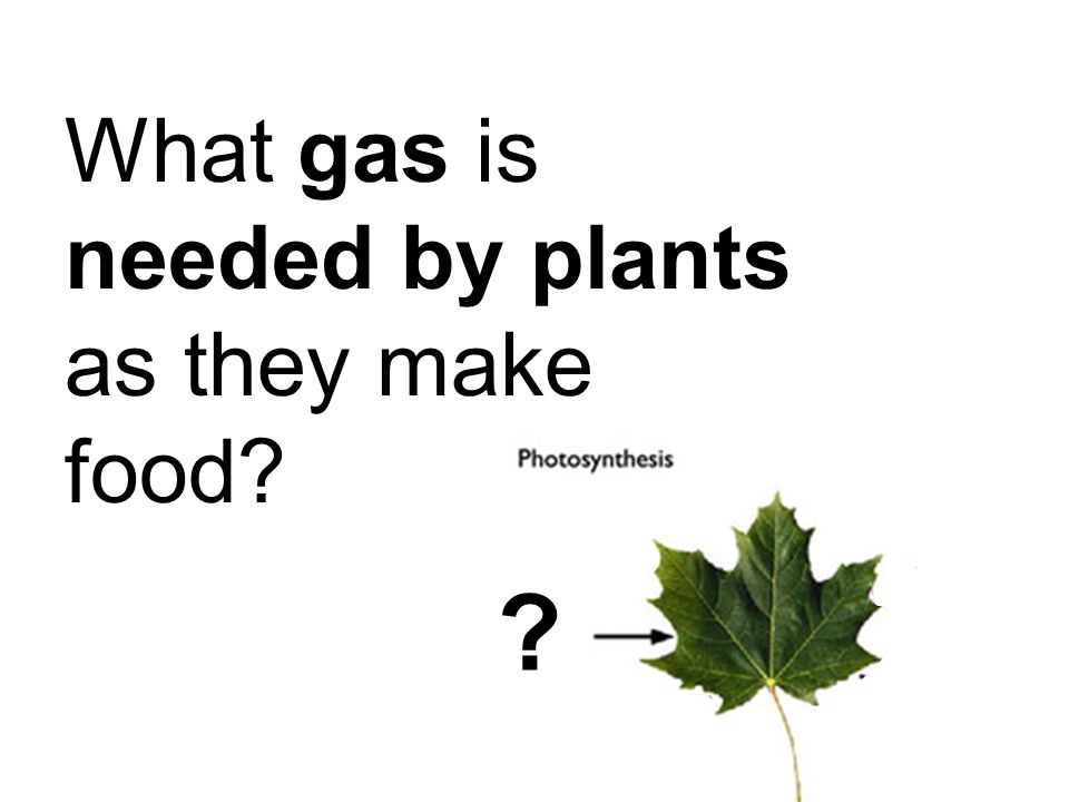 What gas is needed by plants as they make food? ?
