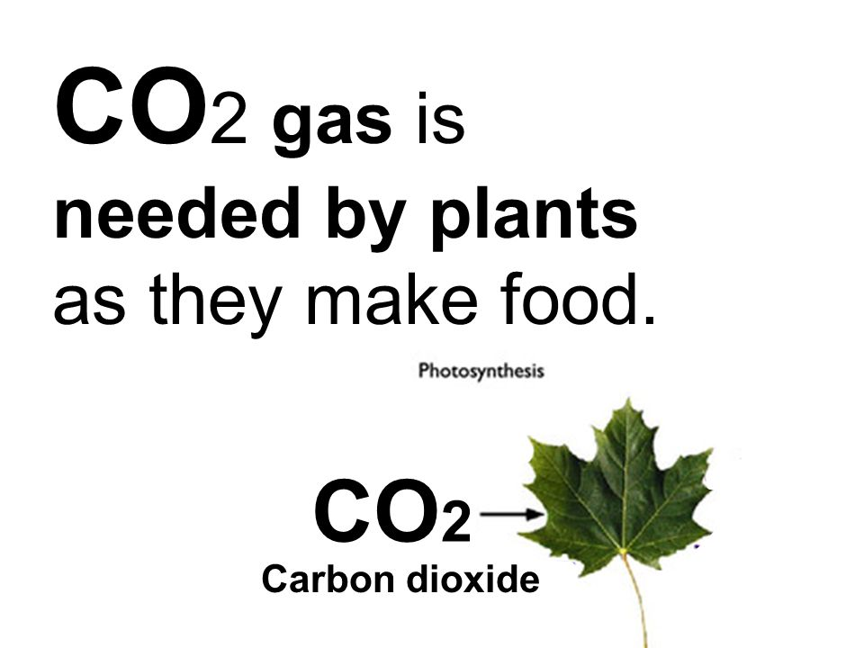CO 2 gas is needed by plants as they make food. CO 2 Carbon dioxide