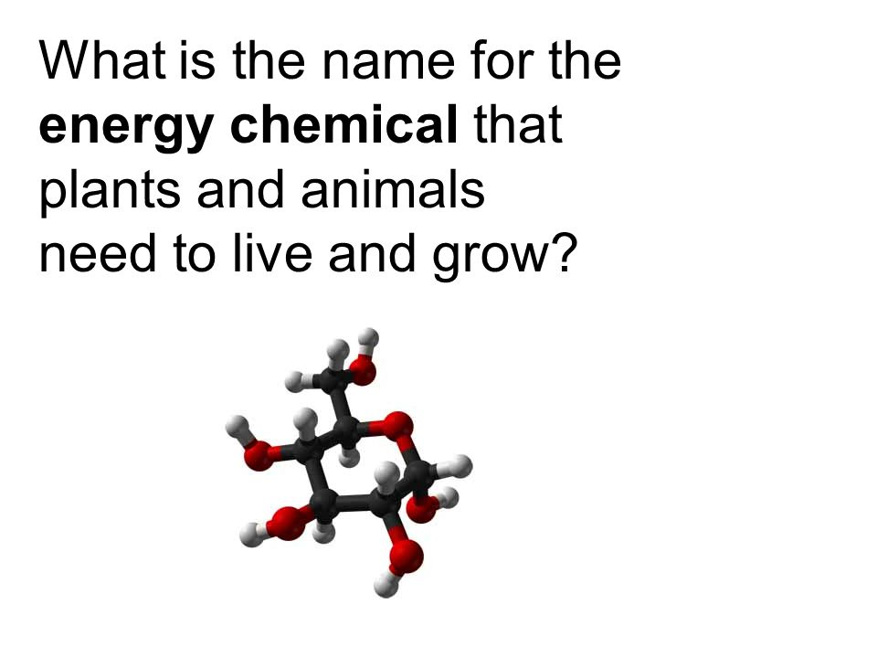 What is the name for the energy chemical that plants and animals need to live and grow?