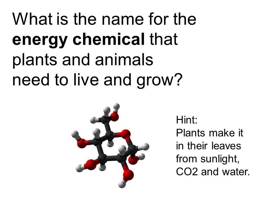 Hint: Plants make it in their leaves from sunlight, CO2 and water.