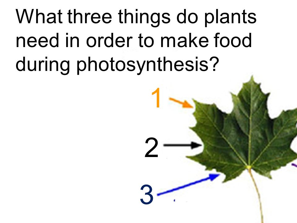 light CO 2 Carbon dioxide H2OH2O water What three things do plants need in order to make food during photosynthesis.