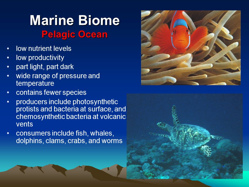 Marine Biome Pelagic Ocean low nutrient levels low productivity part light, part dark wide range of pressure and temperature contains fewer species pr