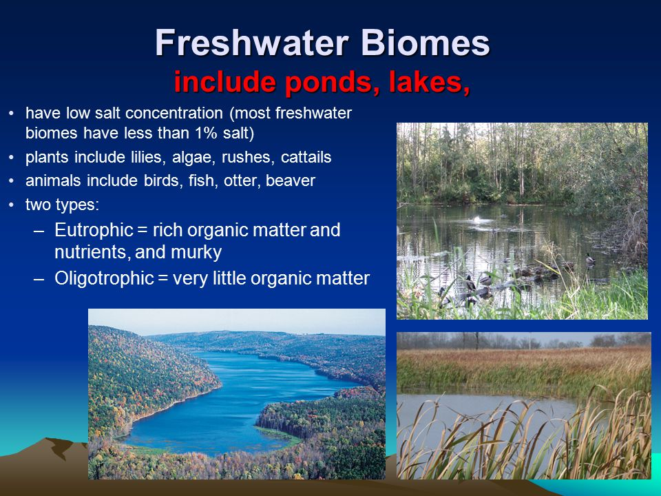 Freshwater Biomes include ponds, lakes, have low salt concentration (most freshwater biomes have less than 1% salt) plants include lilies, algae, rush