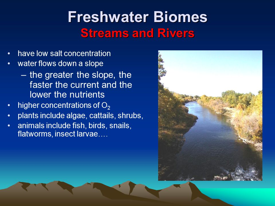 Freshwater Biomes Streams and Rivers have low salt concentration water flows down a slope –the greater the slope, the faster the current and the lower the nutrients higher concentrations of O 2 plants include algae, cattails, shrubs, animals include fish, birds, snails, flatworms, insect larvae….