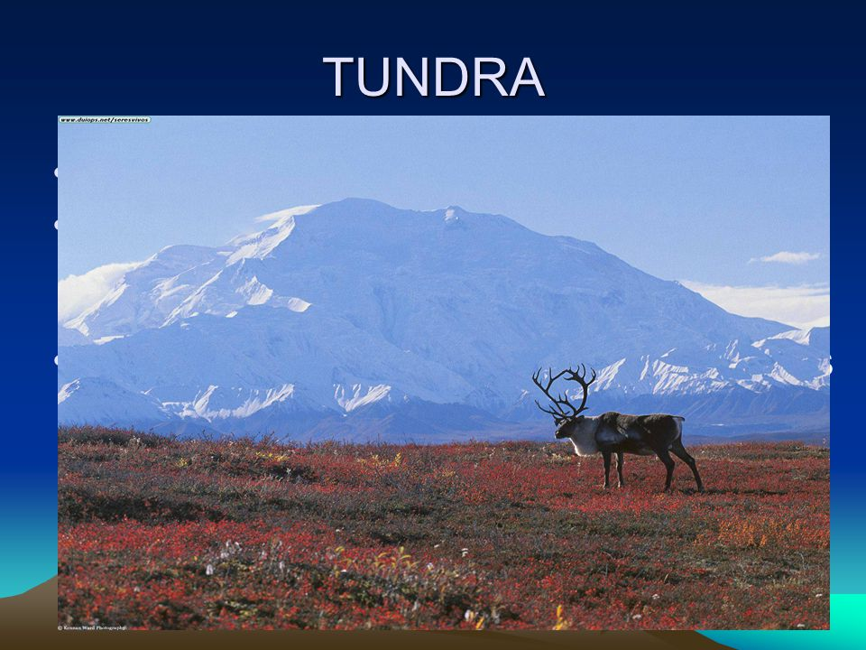 TUNDRA Terrestrial = land Tundra- a treeless land with long summer days and short periods of winter sunlight Permafrost- frozen layer of soil that lie