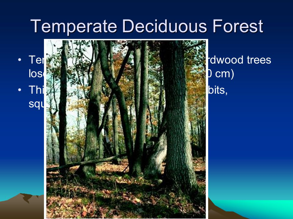 Temperate Deciduous Forest Temperate forest- Broad-leaved hardwood trees lose their foliage annually (70 to 150 cm) This area is dominated by deer, ra