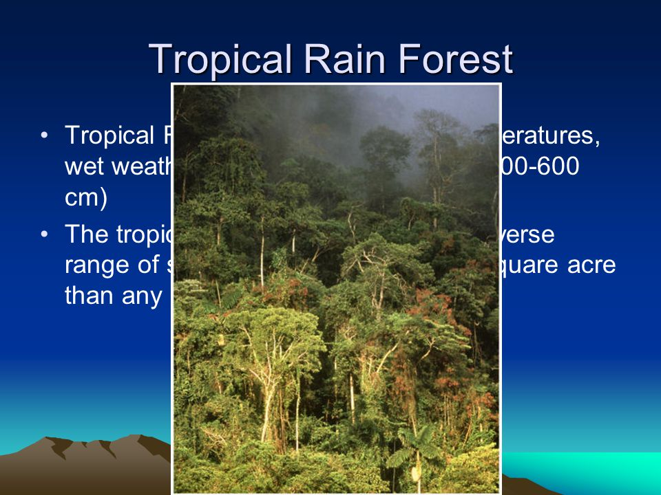 Tropical Rain Forest Tropical Rain Forest- have warm temperatures, wet weather, and lush plant growth.