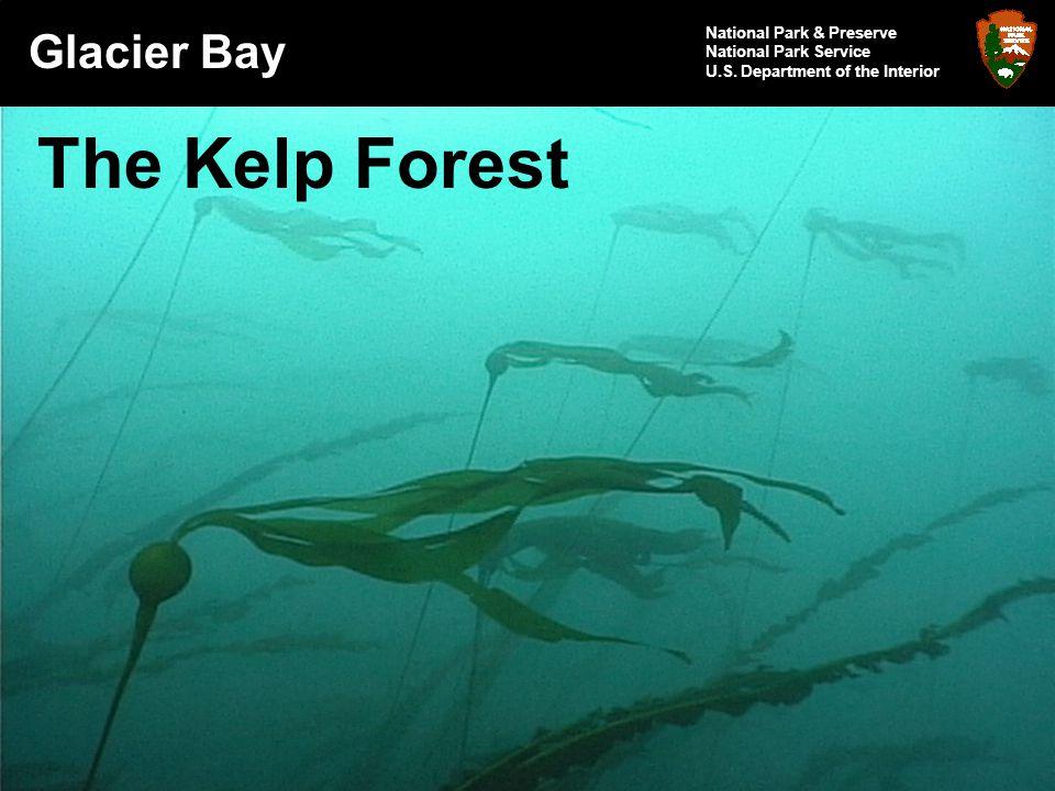 Glacier Bay National Park & Preserve National Park Service U.S.