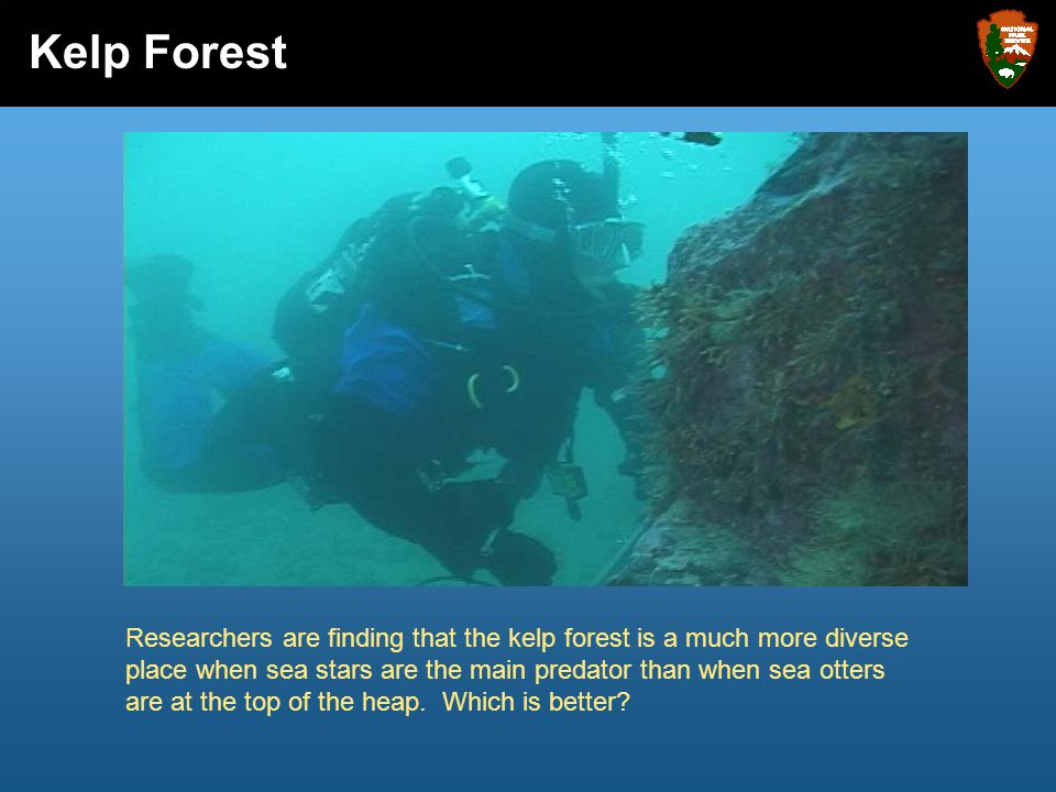 Researchers are finding that the kelp forest is a much more diverse place when sea stars are the main predator than when sea otters are at the top of
