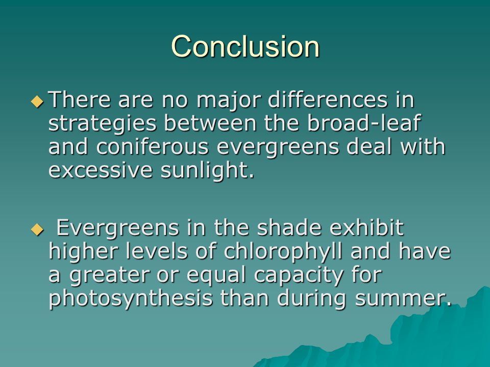 Conclusion  There are no major differences in strategies between the broad-leaf and coniferous evergreens deal with excessive sunlight.