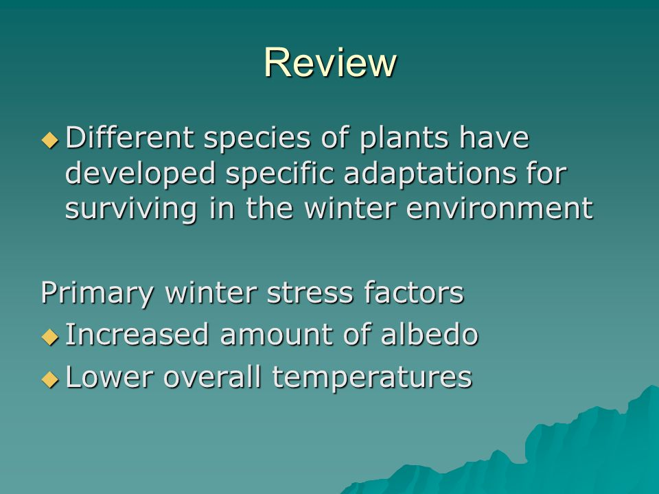 Review  Different species of plants have developed specific adaptations for surviving in the winter environment Primary winter stress factors  Increased amount of albedo  Lower overall temperatures