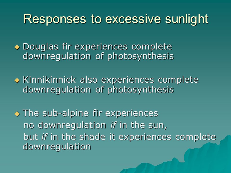 Responses to excessive sunlight  Douglas fir experiences complete downregulation of photosynthesis  Kinnikinnick also experiences complete downregulation of photosynthesis  The sub-alpine fir experiences no downregulation if in the sun, no downregulation if in the sun, but if in the shade it experiences complete downregulation but if in the shade it experiences complete downregulation