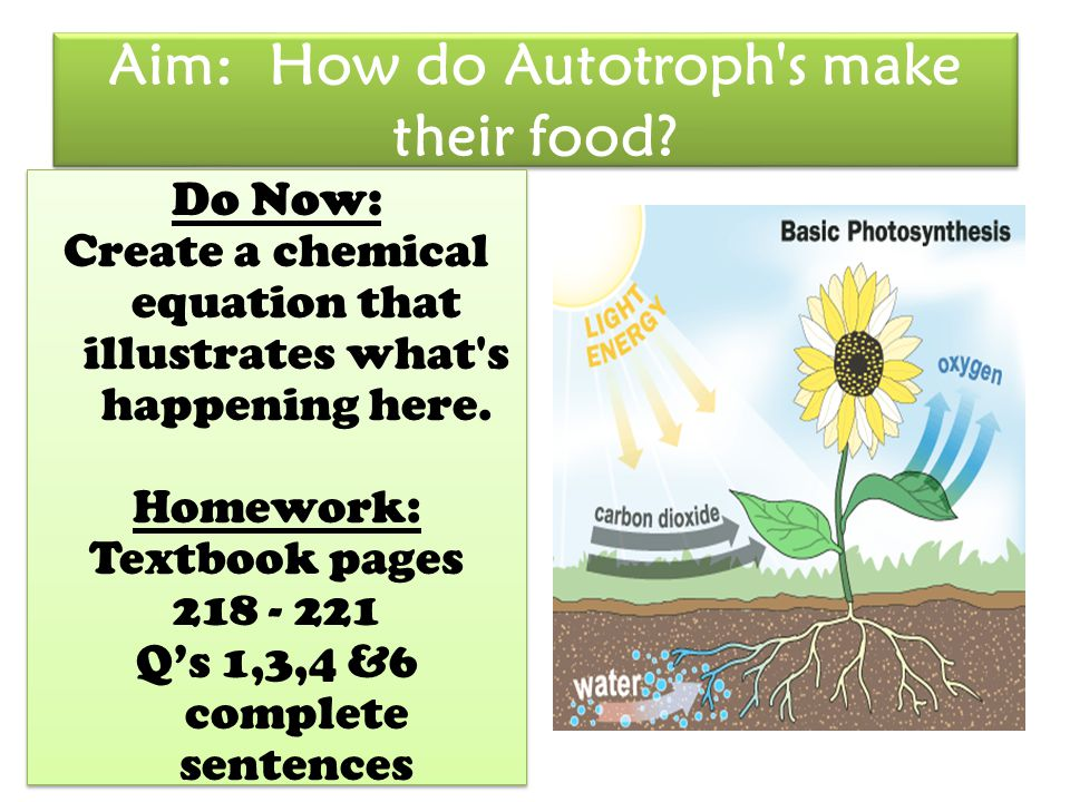 Aim: How do Autotroph's make their food? Do Now: Create a chemical equation that illustrates what's happening here. Homework: Textbook pages 218 - 221