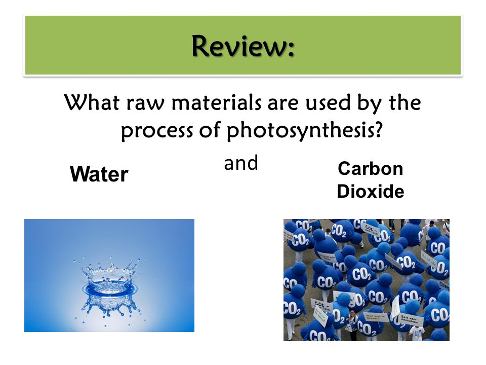 What raw materials are used by the process of photosynthesis and Carbon Dioxide Water