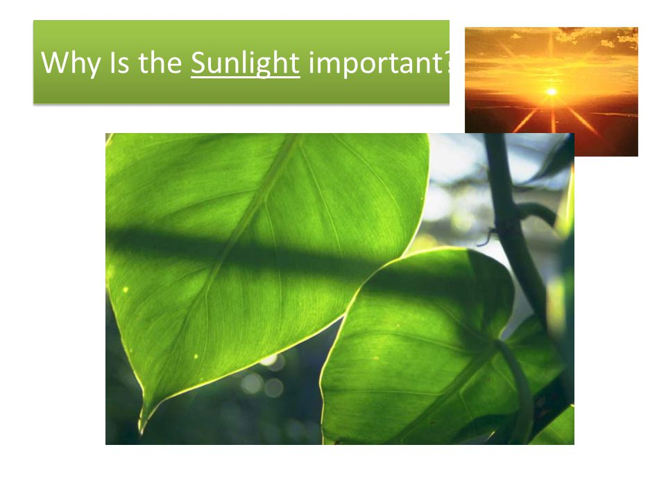 Why Is the Sunlight important?