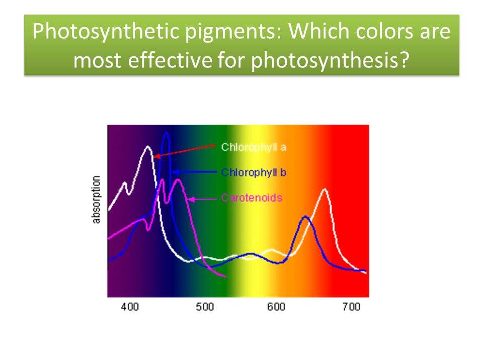 Photosynthetic pigments: Which colors are most effective for photosynthesis?