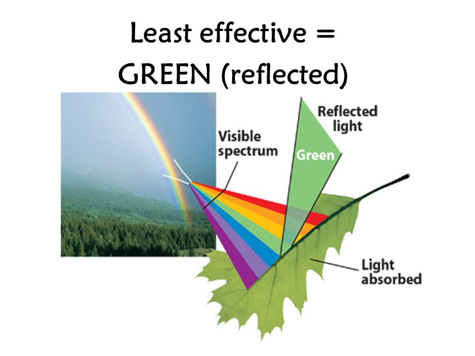 Least effective = GREEN (reflected)