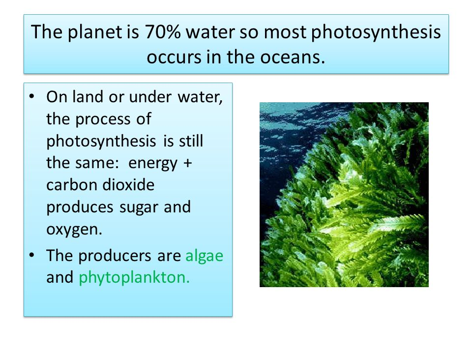 The planet is 70% water so most photosynthesis occurs in the oceans.